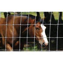 Clôture de bétail / clôture de terrain / clôture de prairie (fournisseur professionnel)