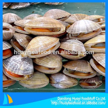 supply frozen high quality surf clam in shell with low price