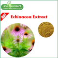 Натуральный экстракт эхинацеи цихоровая кислота