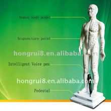 Human Intelligent voice systerm acupuncture point model
