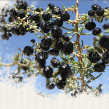 Medlar Organic Herbs Red Dried Black Goji Berry