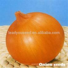 ON01 Dayu maturité précoce f1 hybride jaune graines d'oignon prix