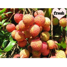 Chinese Big and Sweet Fresh Litchi(lychee)