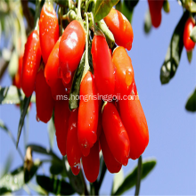 Freeze Goji Berry New Berry