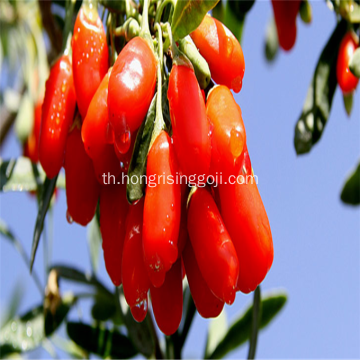 ตรึง Goji Berry New Berry