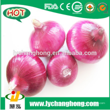 [HOT] China Rote Zwiebel / Chinesische Rote Zwiebel