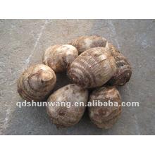 Taro fresco chinês