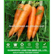 Semillas de zanahoria NCA07 Caitou precio Guangzhou