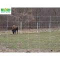 Glavanized PVC Coated Field Fence Deer Farm Fence