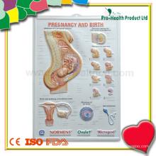 Анатомический медицинский 3D-плакат для обучения