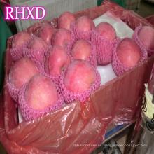 Nuevos precios de fruta fresca de la cosecha de Fuji