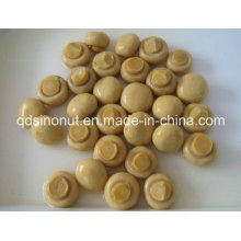 Whole Mushroom with High Quality, Nice Size, Best Price (HACCP, ISO, BRC, FDA, HALAL, KOSHER)