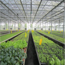 Ebb e Flow Rolling Bench para Seedling in Greenhouse