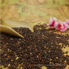2017 nouveau millet de sorgho noir de culture (maïs balai glutineux / millet commun)