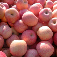 NingXia Nya färska Super Grade Red Fuji Apples