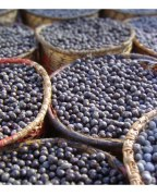 Acai Powder, Extract, Concentrate, Juice Powder, Fruit Powder, Freeze Dried, Organic, Capsules, Tablets