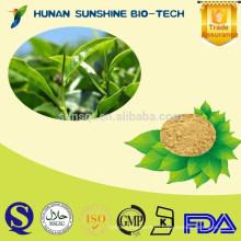 100% Натуральный Экстракт Зеленого Чая Порошок/ Зеленый Чай Порошок/Зеленый Чай П. Е.