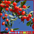 Хорошо для здоровья семена ягоды годжи годжи ягоды купить годжи ягоды