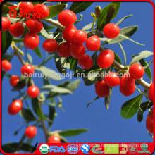 precio razonable Siyah goji berry bayas de goji Ningxia goji por mayor