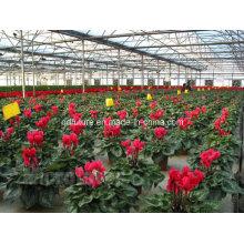 100% Organic Sophocarpidine Plant Marine Extract 10-60%