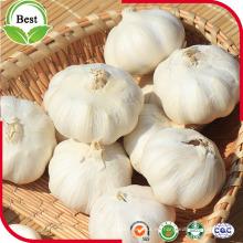 4.5 cm arriba precio al por mayor blanco normal del ajo para la exportación
