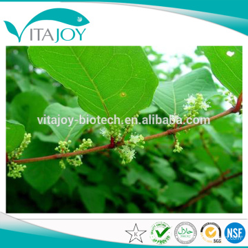 Pure Natural 50%-98% Resveratrol / polygonum cuspidatum extract