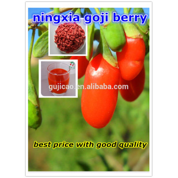 Semillas de níspero Wolfberry Chinese Food Chinese Beery Berry