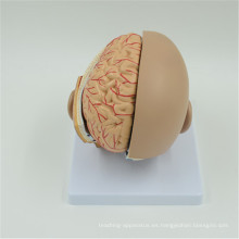 Nueva marca 2017 Plastic Brain Models en venta