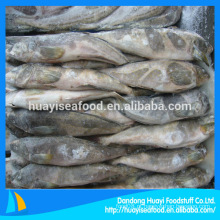 Greenling peixes gordurosos inteiros à venda