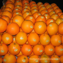 30-40mm/40-49mm Good Quality China Fresh Mandarin