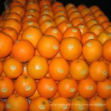 30-40mm / 40-49mm Bonne qualité Chine Mandarin frais