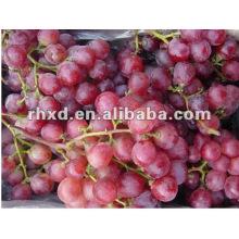 uva carmesí sin semillas con la mejor exportación de fábrica
