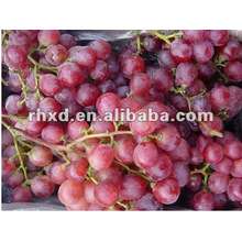 crimson seedless grape with factory best price export