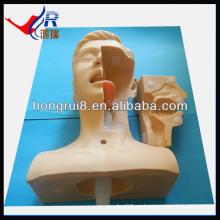 Simulación médica de succión avanzada, entrenamiento de succión