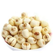 Organischer getrockneter weißer Lotos-Samen ohne Plumule und Schale