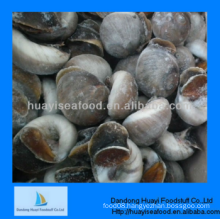 frozen good quality moon snail