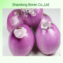 Supply Low Price&High Quality Onion