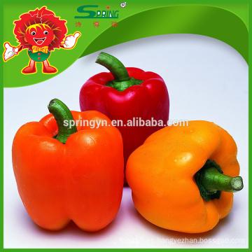 Color pimiento capsicum naranja