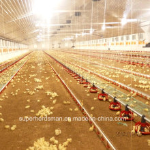 Automatic Chicken Farming Equipment for modern Farm