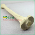 WHOLESALE SIMULATION BONE 12319 Medical Synthetic Tibia Model, Orthopaedics Practice Simulation Bone