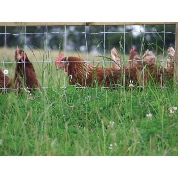 Deer Fence (R-CYW)