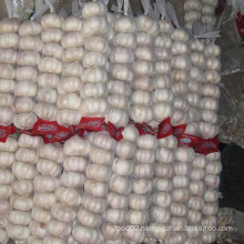Chinese Fresh Normal Garlic in Small Mesh Bag Hot Sale