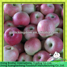 China fresh royal red gala apple