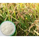 Rice Bran Extract Natural Ferulic Acid 99% HPLC