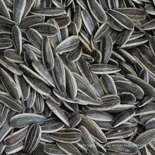 Лучшие семена подсолнуха сорта в Внутренняя Монголия