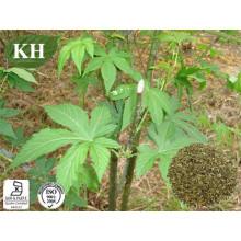 Sweet Tea Extract (Rubusoside 75% HPLC)