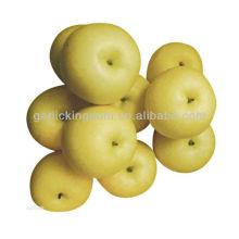 Золотая груша, богатая Vc, Vb, хороший вкус и форма груши с лучшей ценой груша