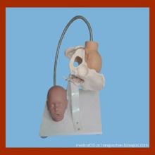 Pelve feminina com modelo de cabeça fetal, modelo de demonstração de parto