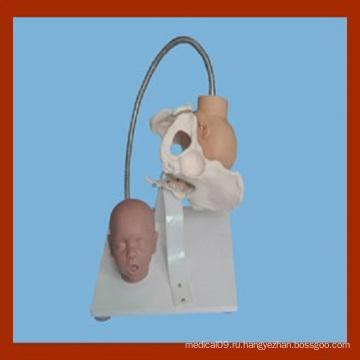 Модель женского таза с головкой плода, Демонстрационная модель родов