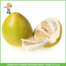 Chinese Sweet New Crop Fresh Pomelo 11Kg Carton